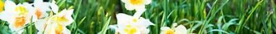 Narcisse2 464x310